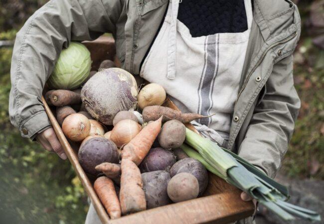 Hva er sunn, variert og bærekraftig mat?